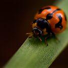 Ladybug by Carly Chapman