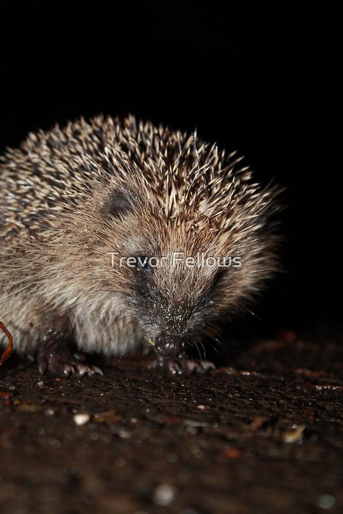 Hedgehog by Trevor Fellows