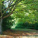Autumn Canopy by Ann Garrett