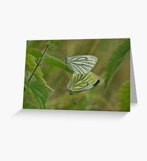 Greenveined White Butterfly Greeting Card