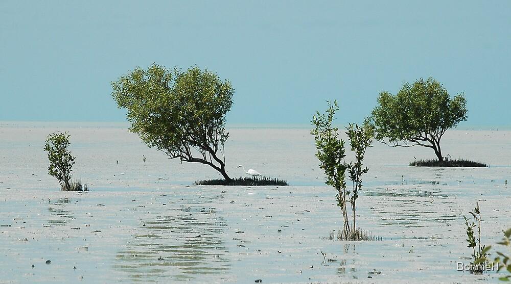 Birdwatchers paradise - Roebuck Bay by BonnieH
