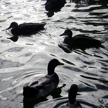 Ducks by sergiocolour