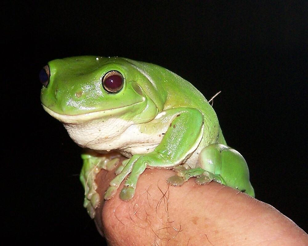 Frog by heyitsmefi
