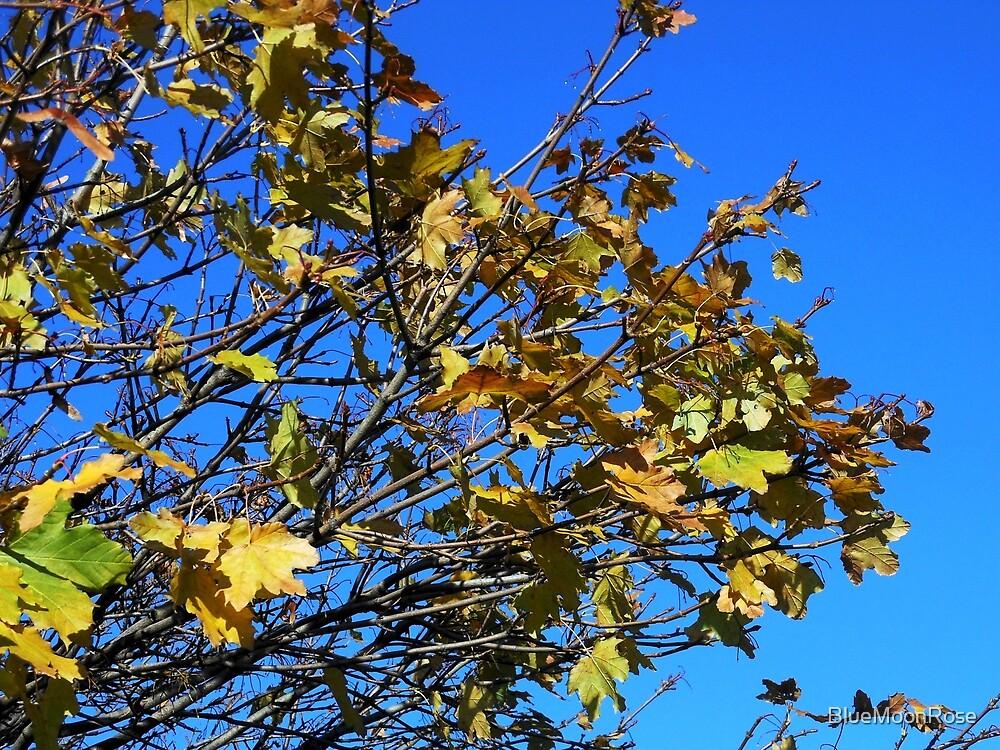 Sonnenbeschienene Herbstblätter von BlueMoonRose