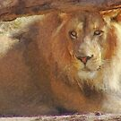Stylized photo of adult male african  lion. by NaturaLight