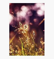 Tao Photographic Print