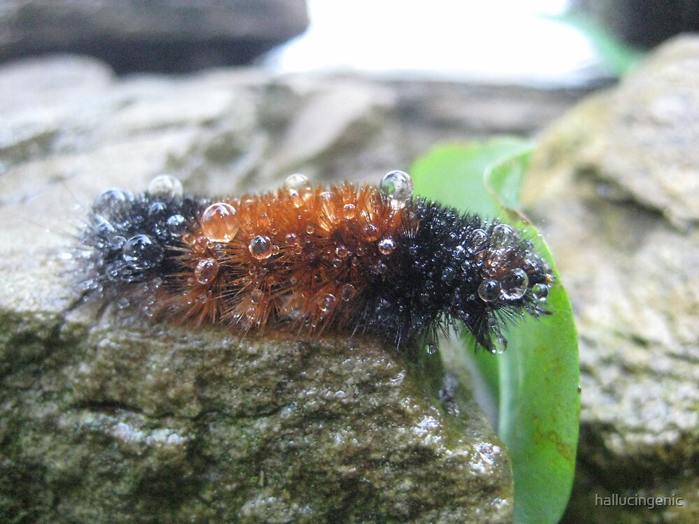 Wet Caterpillar by hallucingenic