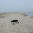 Dog on Shingle by scarletjames