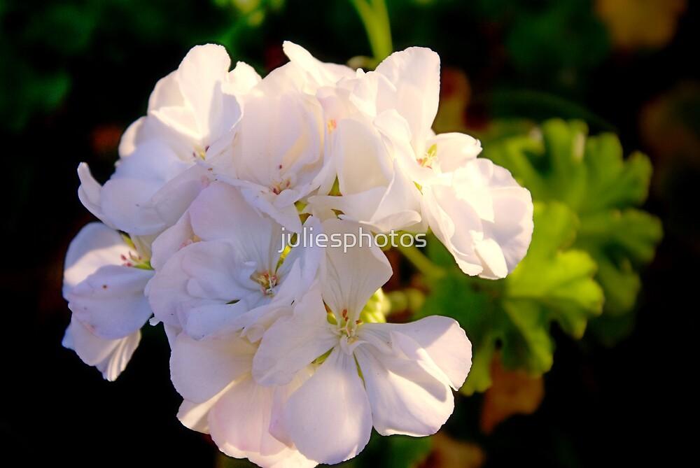 White Flower by juliesphotos