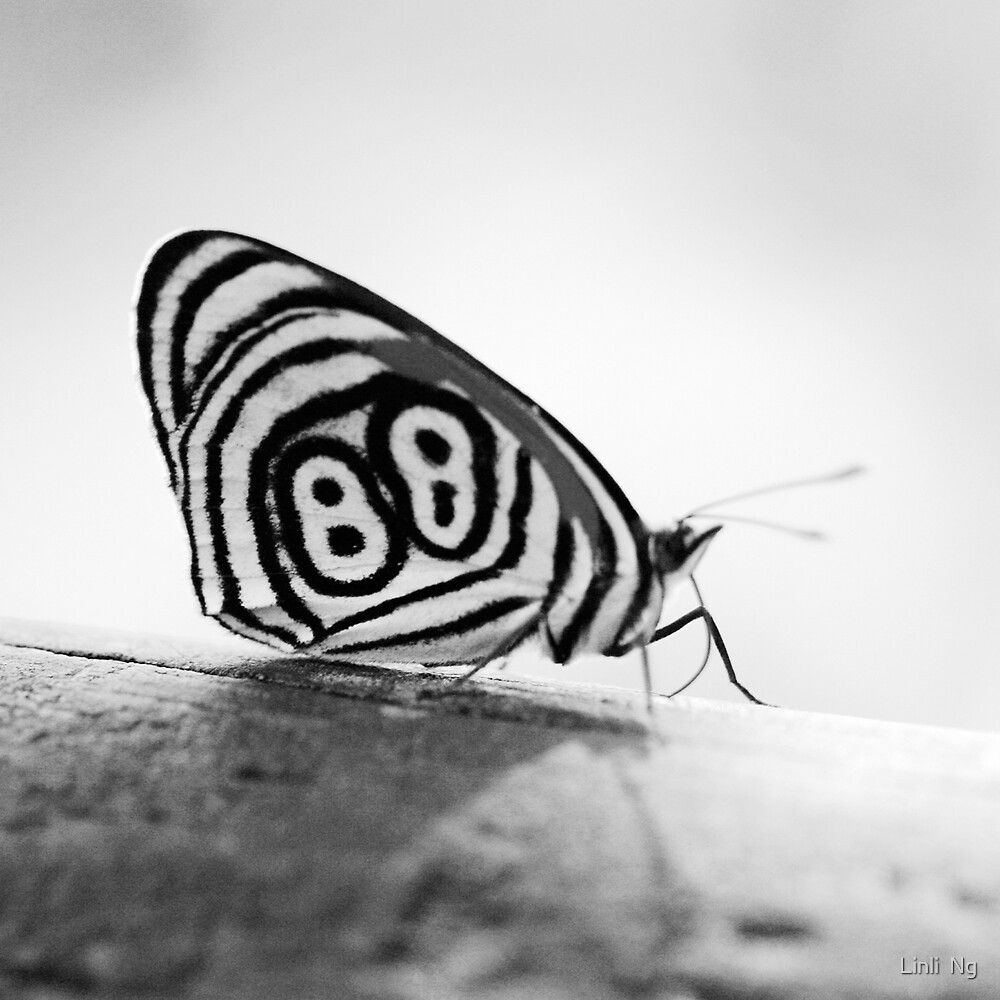 Lucky Butterfly by Linli  Ng