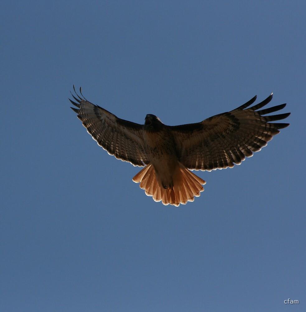 R.T. Hawk #2 by cfam