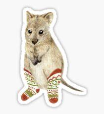 Quokka in Socks Sticker
