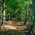 Faerie Path by Ann Garrett