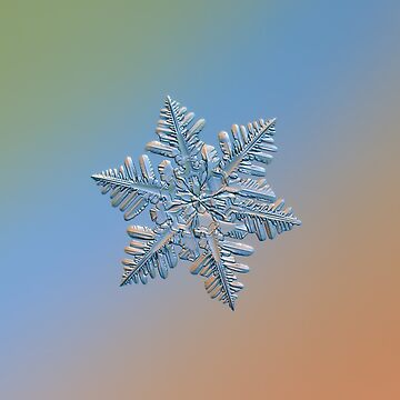 Real snowflake - 13 February 2017 - 5 by chaoticmind75