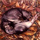 echidna by Liesl Yvette Wilson