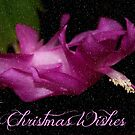 Christmas Wishes to ALL by AnnDixon