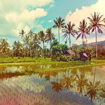 Rice Paddies of Bali by TamasinLangton