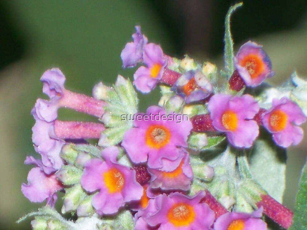 Butterfly Bush 3 by sweetdesign