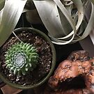 Plant Medicine by RADLabs