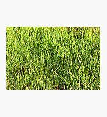 Green grass background Photographic Print