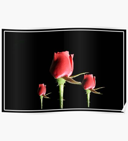 Red Roses With Frame Poster