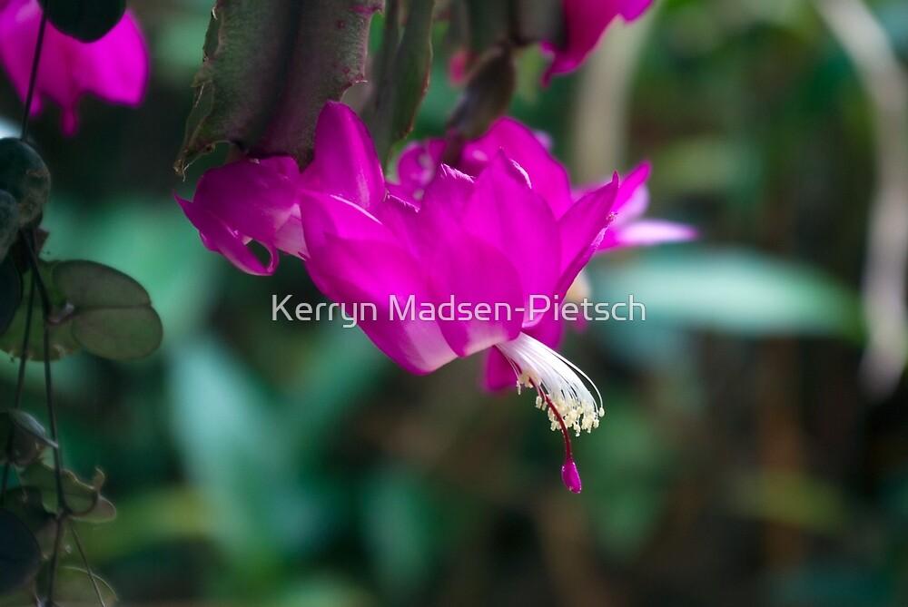 Magenta Beauty by Kerryn Madsen-Pietsch
