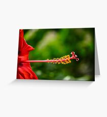 Hibiscus on the green Greeting Card