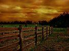 Across The Field 1 by Dan Perez