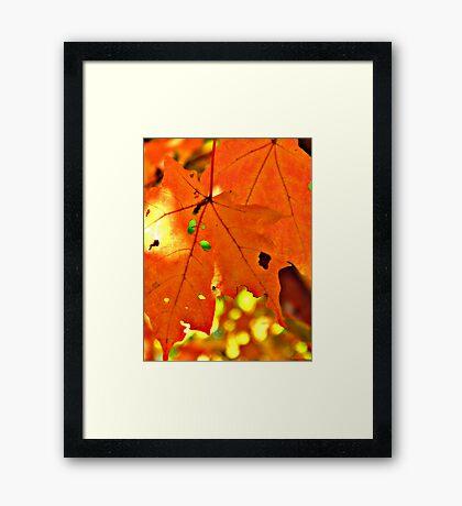 Sun Through the Leaves Framed Print