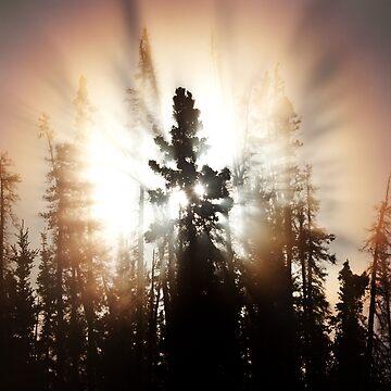 Spruce by Martsam