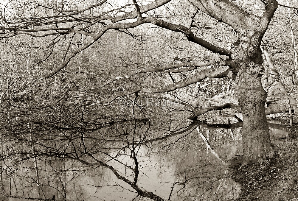 Tangled Branches, Forest Pond, UK  by Gary Rayner
