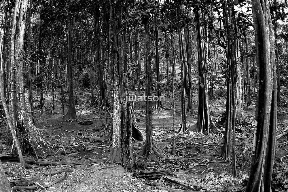 The Dales Walk, Christmas Island, Indian Ocean by jwatson