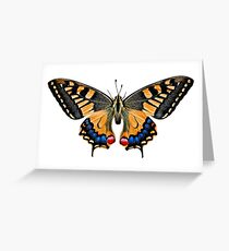 Butterflies fond flowers in nature Greeting Card