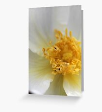 Flower Collection 3 Greeting Card