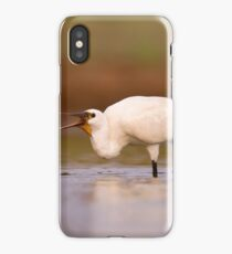 Eurasian spoonbill or common spoonbill (Platalea leucorodia) wading in water.  iPhone Case/Skin