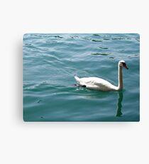 Swan on Lake Zurich Canvas Print