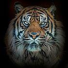 Tiger, Tiger Burning Bright by Brian Tarr