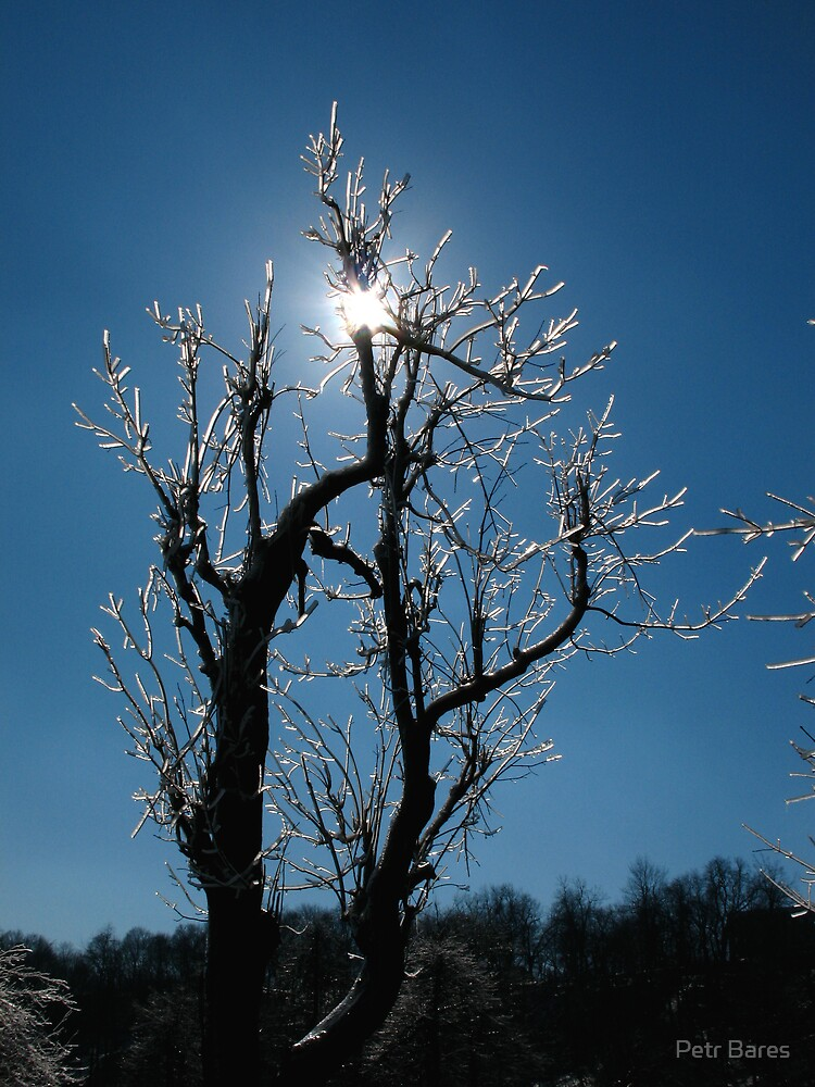 Ice tree and sun by Petr Bares