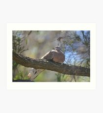 Spotted Turtle Dove Art Print
