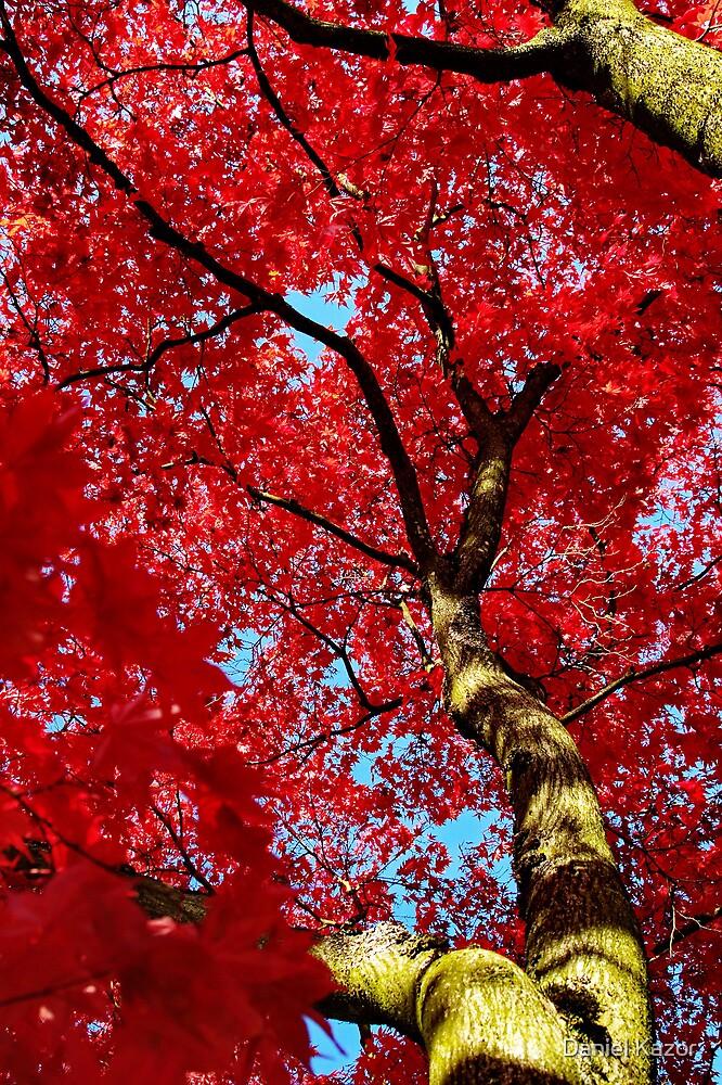 Crimson Canopy by Daniel Kazor