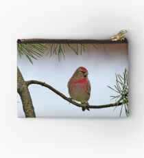 Lesser Red Poll - Carduelis Cabaret Studio Pouch