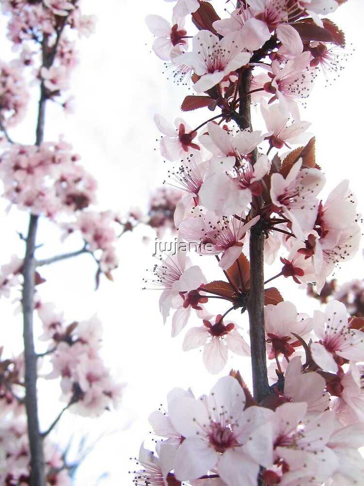 Blossom overexposed by jwjanie