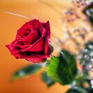 Red Rose of Love by eXparte-se