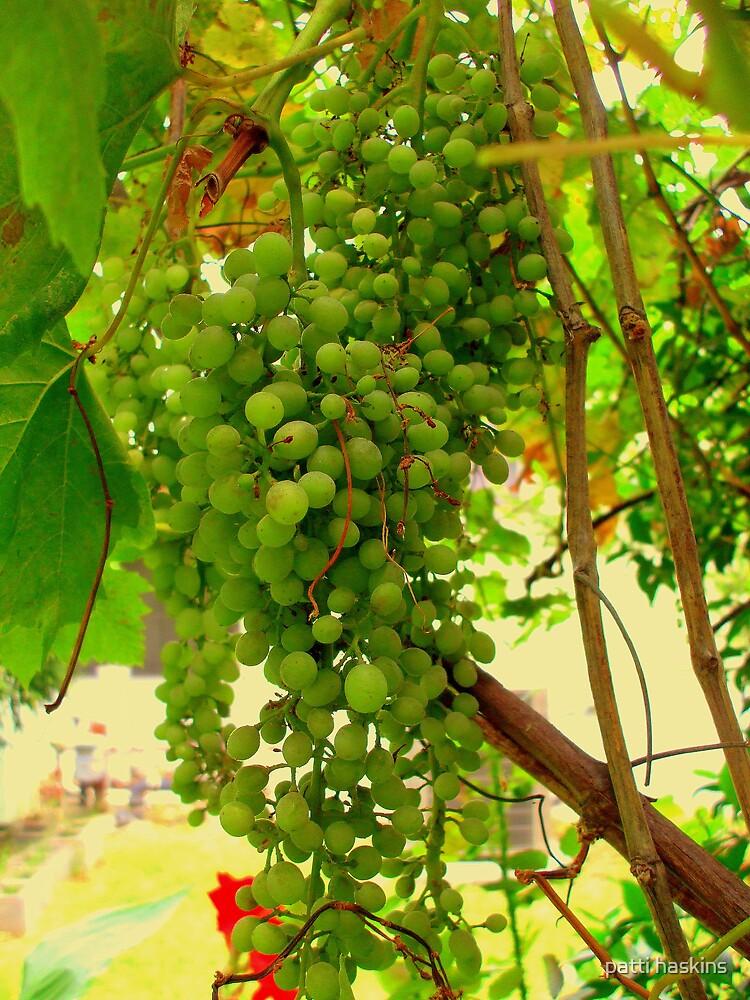 Chardonnay by patti haskins