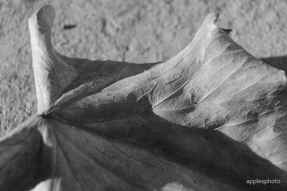 Crunch dusk by applesphoto