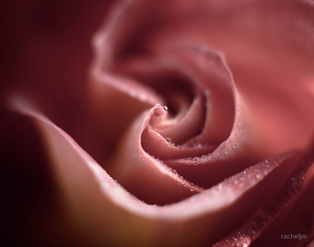 natural rose beauty by racheljm
