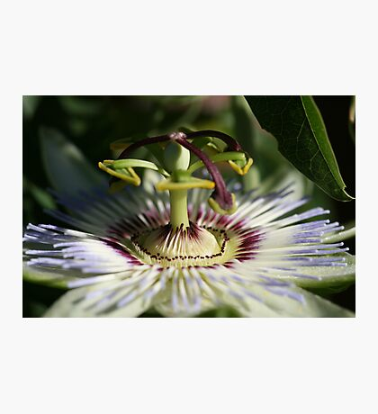 Floral Fountain Photographic Print