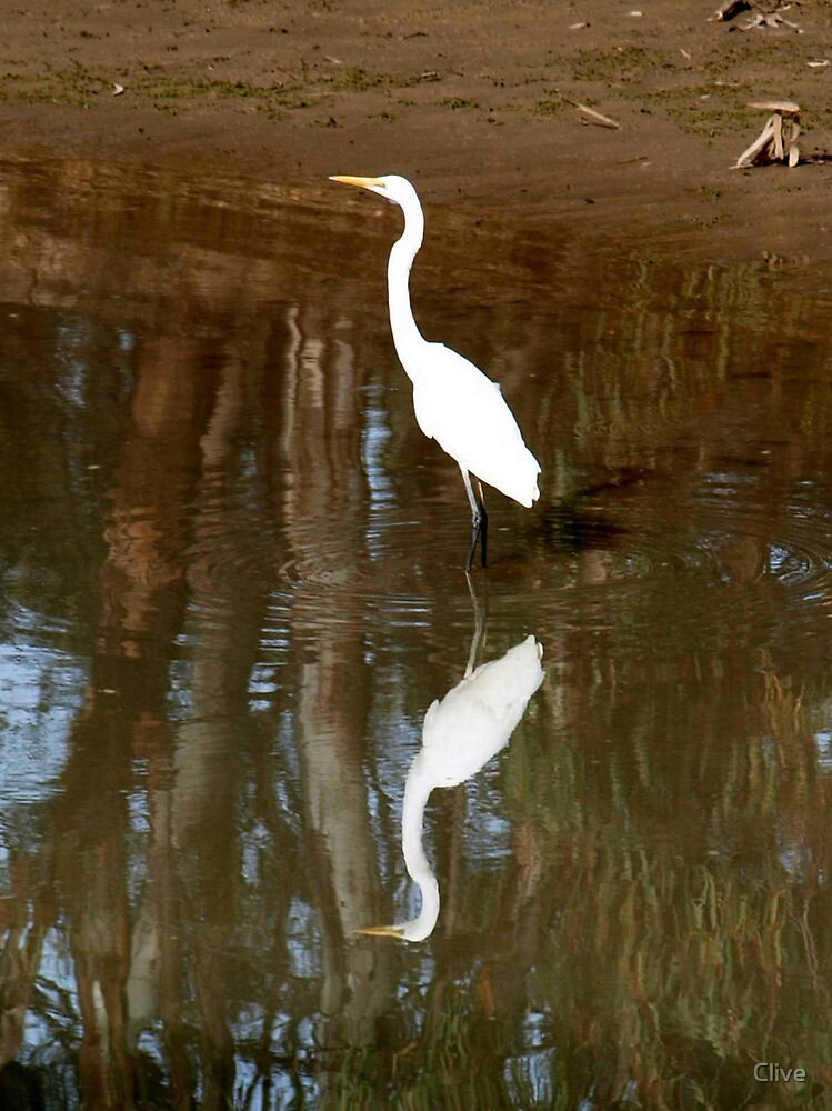 Egret Reflection by Clive