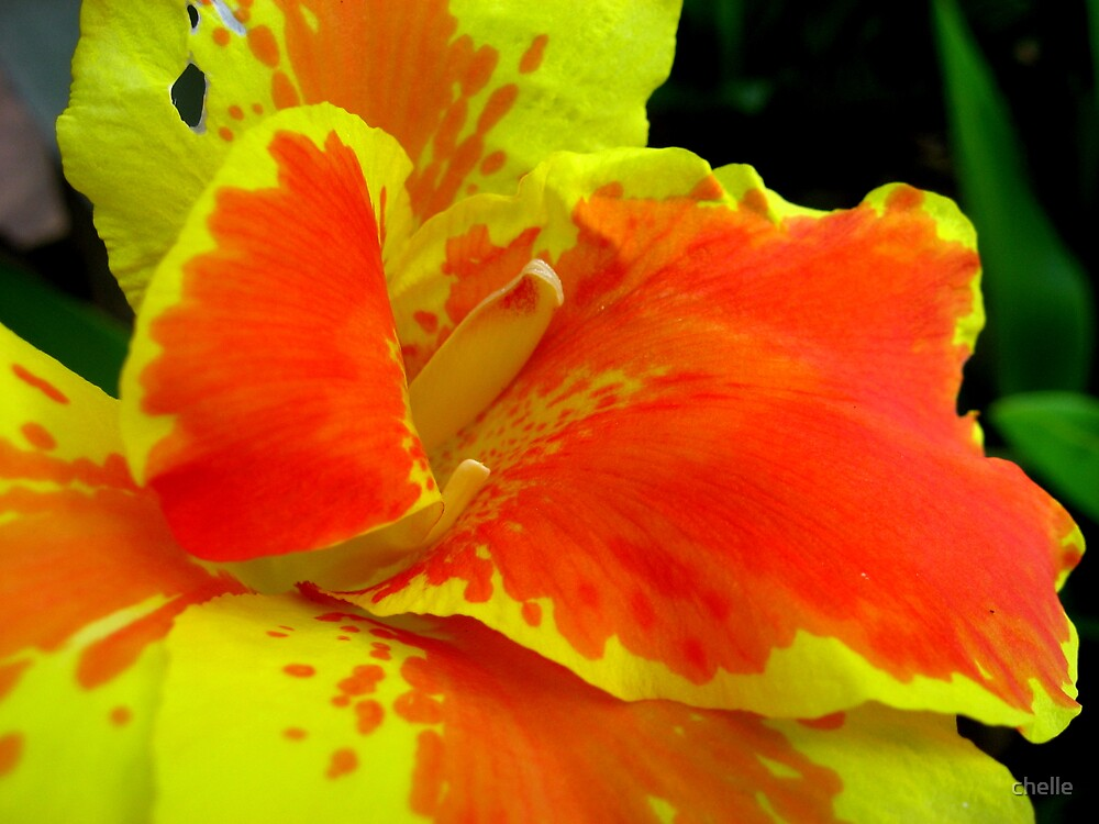 Tropical light by chelle
