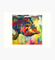 Duck-Billed Platypus - Australian mammal Art Print